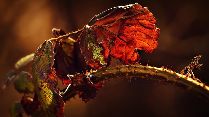 Leaves and Light-038.jpg