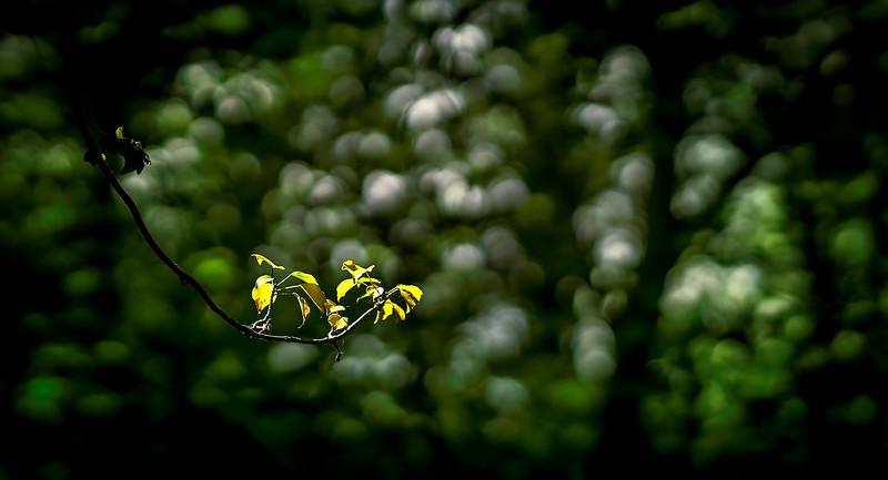 Leavces in the Light-034.jpg