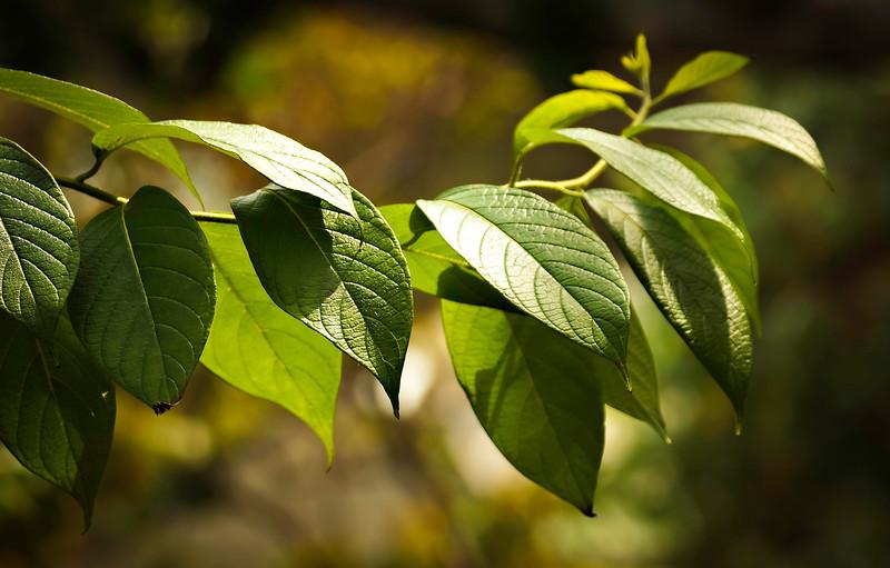 Leaves and Light-094.jpg