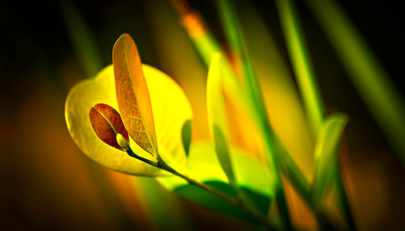 Leaves and Light-061.jpg