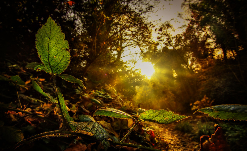 Leavces in the Light-027.jpg