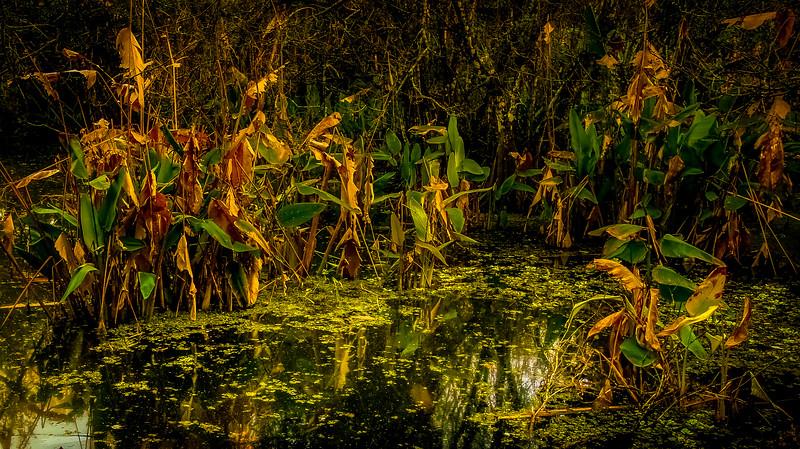 Leaves and Light-090.jpg