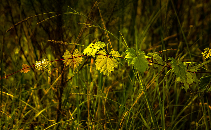 Leaves and Light-136.jpg