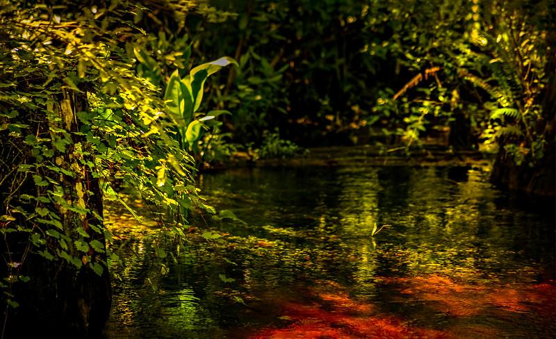 Leaves and Light-124.jpg