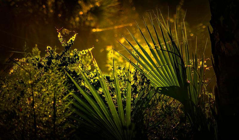 Leaves and Light-113.jpg