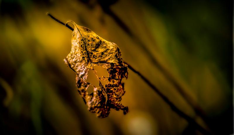 Leaves in the Light-023.jpg