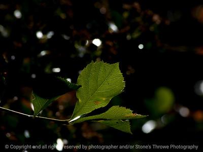 015-leaf-wdsm-26may16-12x09-002-2480