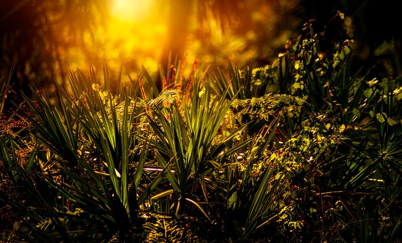 Leaves and Light-122.jpg