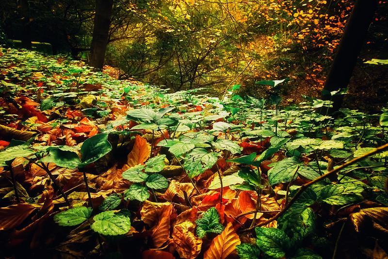 Leaves in the Light-004.jpg