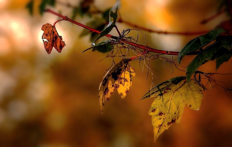 Leaves in the Light-070.jpg