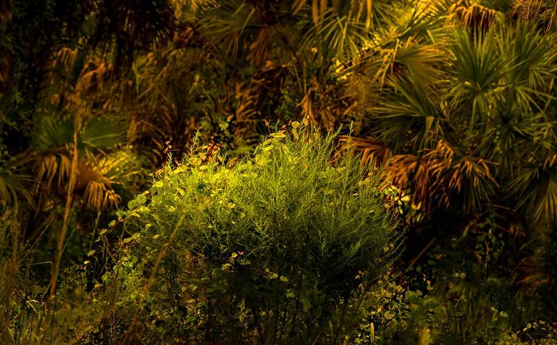 Leaves and Light-125.jpg