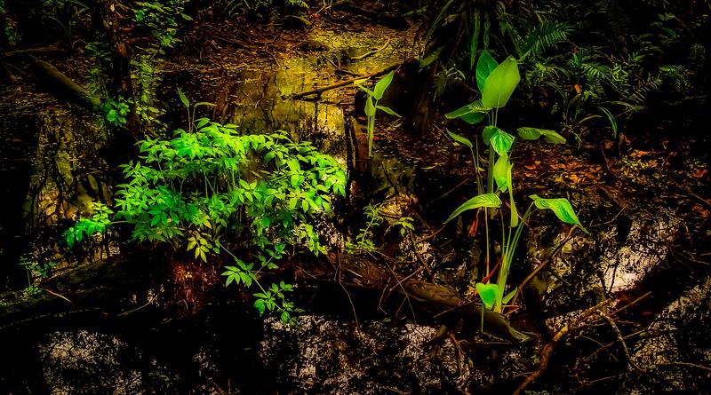 Leaves and Light-129.jpg