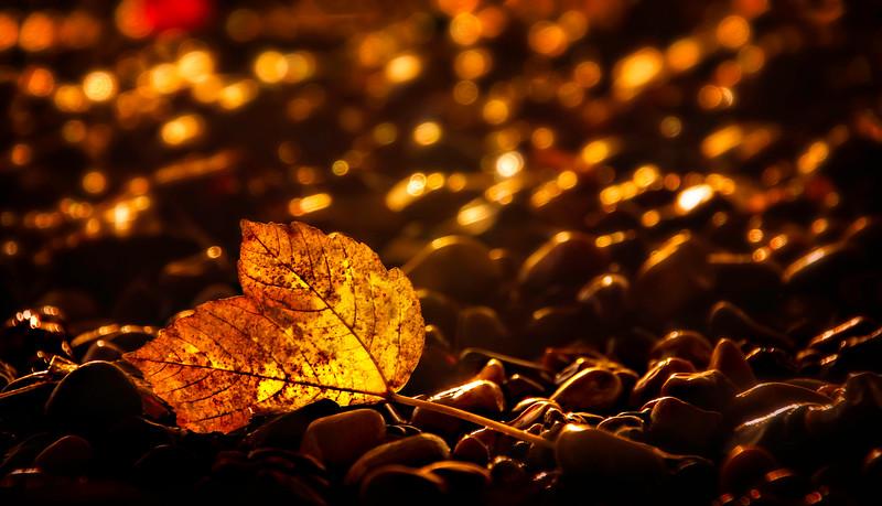 Leaves and Light-045.jpg
