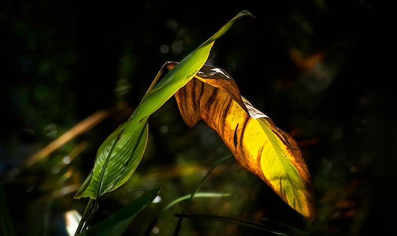 Leaves and Light-173.jpg