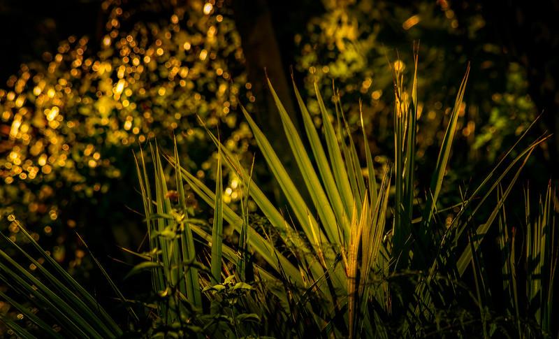 Leaves and Light-118.jpg