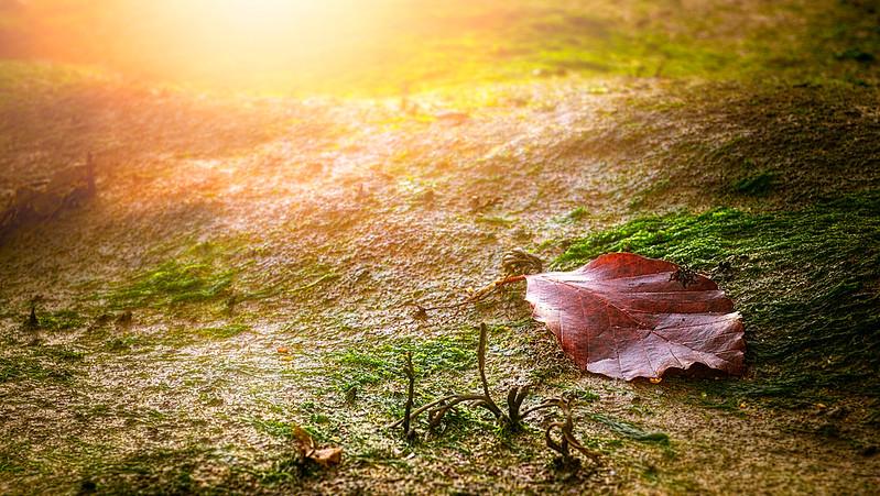 Leaves and Light-033.jpg