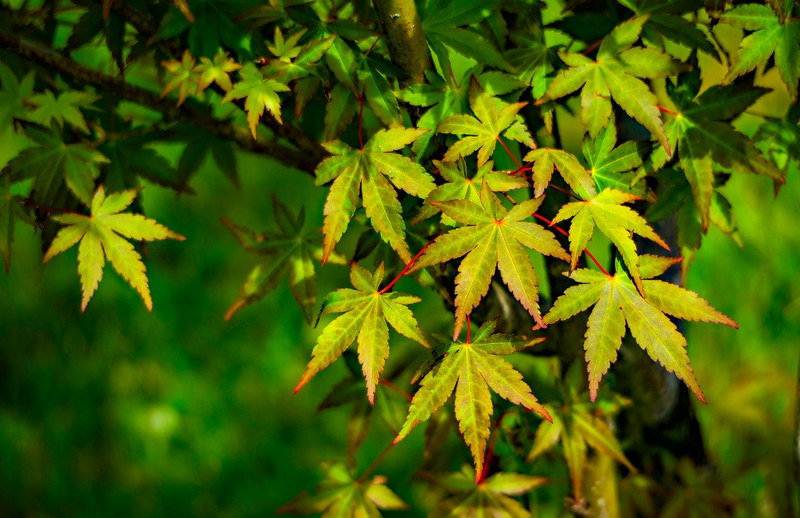 Leaves and Light-064.jpg