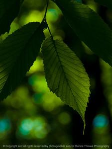 015-leaf-wdsm-01jun16-09x12-001-9531