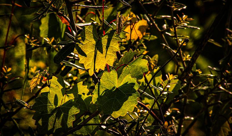 Leaves and Light-176.jpg