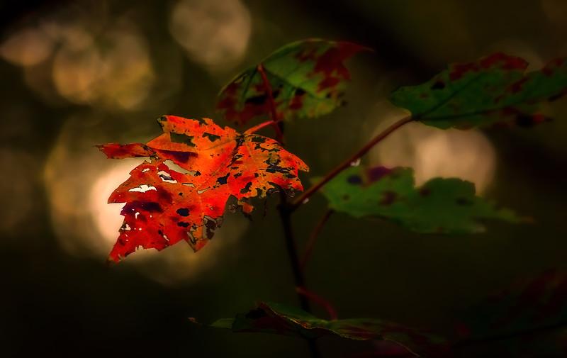 Leaves in the Light-063.jpg