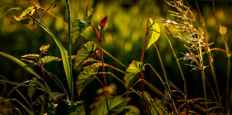 Leavces in the Light-025.jpg