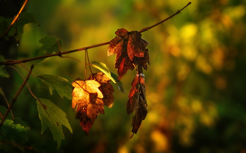 Leaves in the Light-068.jpg