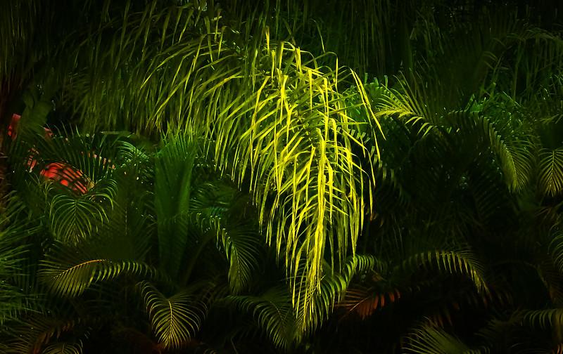 Leaves in the Light-055.jpg