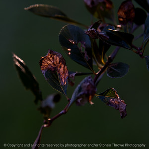 015-leaves-wdsm-08sep17-09x09-006-1473