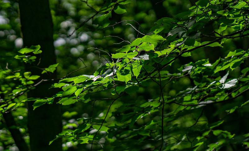 Leaves and Light-016.jpg