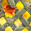 Red Leaf on Fiery Grate