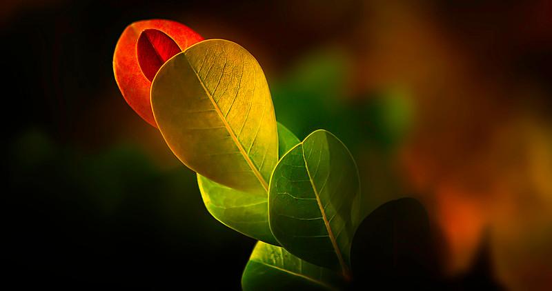 Leaves and Light-062.jpg