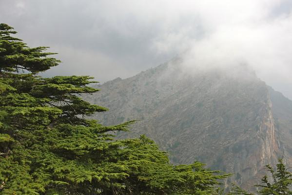 Cedars of Tannourine