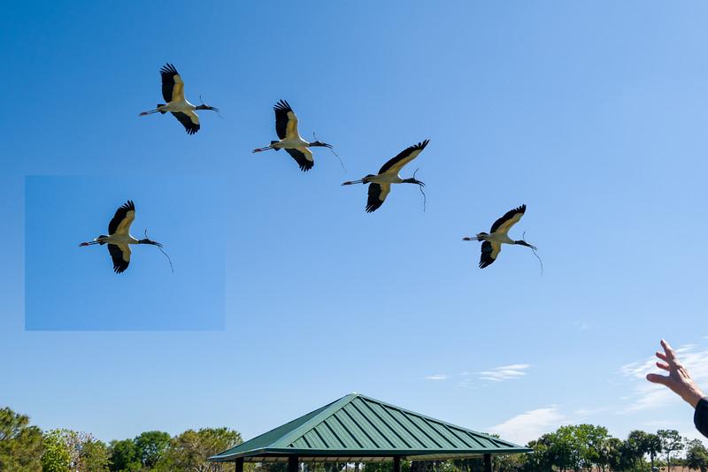 PS Birds