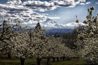 Columbia Gorge April 2014