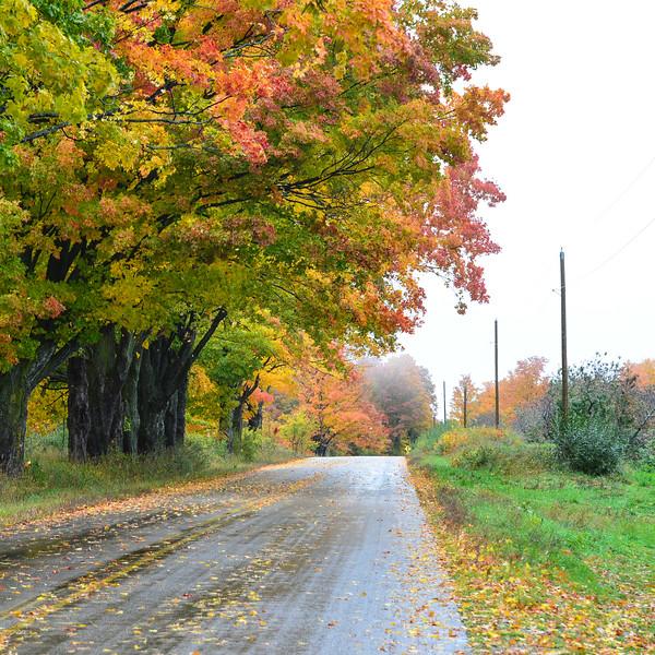 Rural highway, Leelanau County, fall