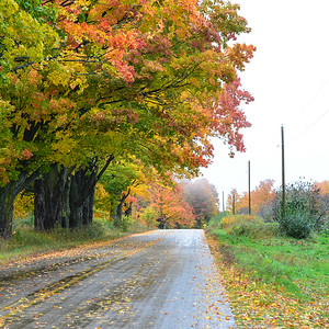 Rural highway, Leelanau County, fall