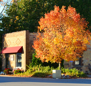 Verterra Winery, fall color, on corner of M22 and River St Leland