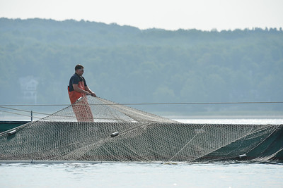 Stretching the net while the trap net boat slides underneath it. Darryl Herman.