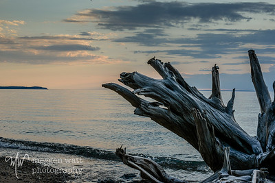 TLR-20170529-9150-driftwood and sunset
