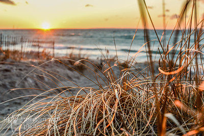 TLR-20180226-5333 Dune Grass and the setting sun, Leland's South Beach
