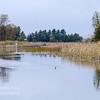 TLR-20151005-8559 Duck at the Narrows