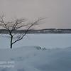 TLR-20140127 - Tree and Lake Leelanau