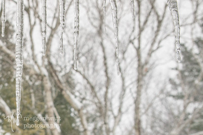 TLR-20180416-Icicles from fresh snow, mid-April