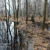 TLR-20170327-8292 Beaver Pond