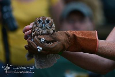 MWP_5276-baby-screech-owl-hands