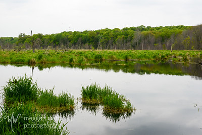 TLR-20160530-3287-Pond by Pole Bridge, N Manitou