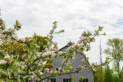 TLR-20160530-3283-Barn and Blossoms, N Manitou