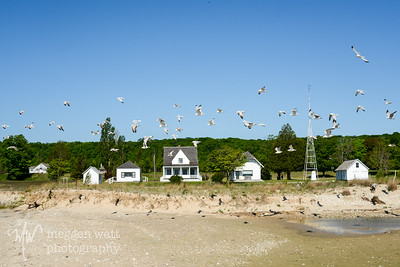 TLR-20160530-3365-Gulls by Ranger Station, N Manitou