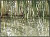Grassey Flood