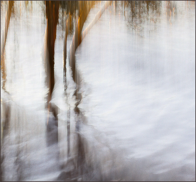 Of Water & Trees